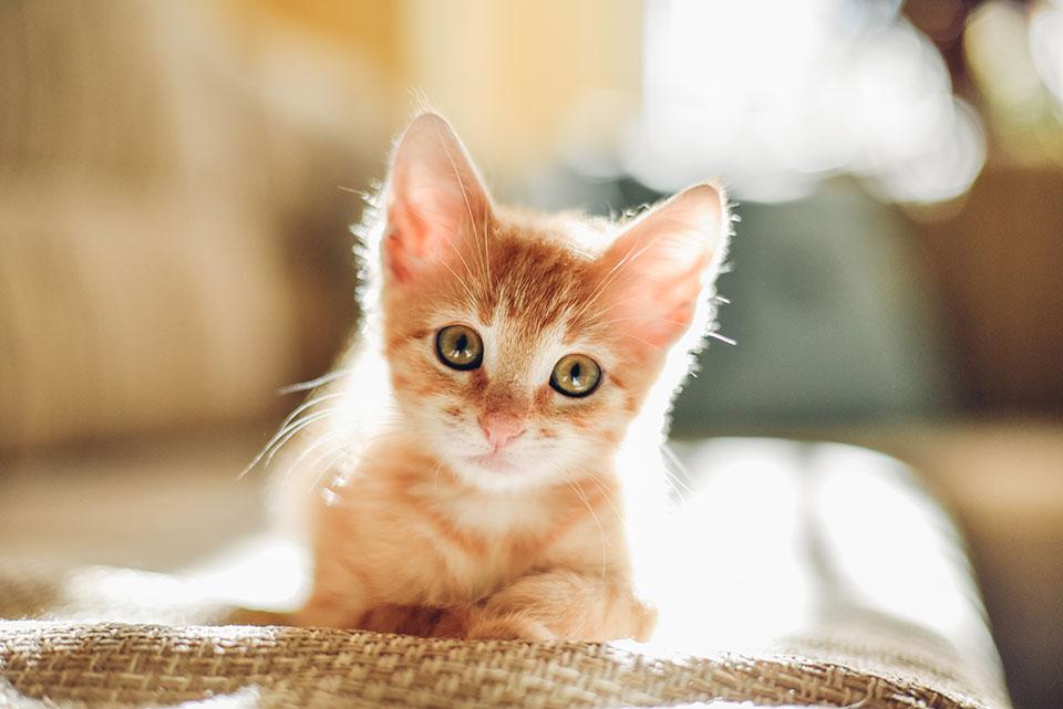 Close up of a kitten