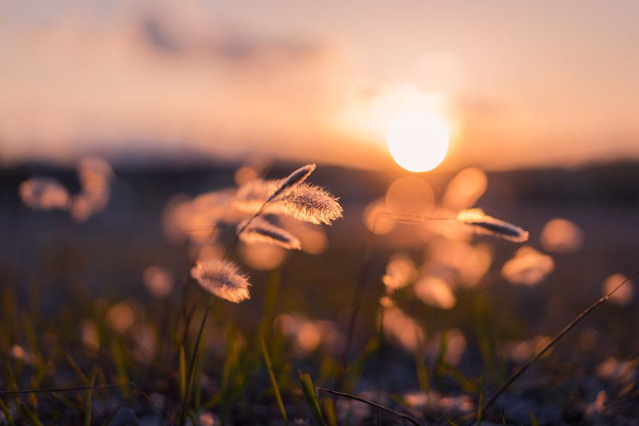 Sunset in long grass