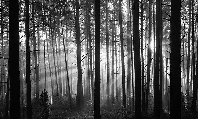 Black and white light through trees
